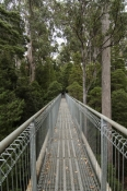 arve-forest;geeveston;tahune;tahune-forest-air-walk;tahune-forest-airwalk;forestry-tasmania;tasmania;tassie;tasmania-forests;tasmania-tourist-attractions;eucalypt-rainforest