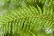 Ferns & Palms