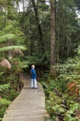 dismal-swamp;the-tarkine;tarkine;blackwood-sinkole;tarkine-sinkholes;northwest-tasmania;tasmainia;tassie;tasmania-forests;forestry-tasmania;boardwalk;dismal-swamp-boardwalk