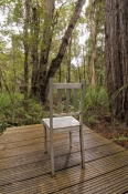 dismal-swamp;the-tarkine;tarkine;blackwood-sinkole;tarkine-sinkholes;northwest-tasmania;tasmainia;tassie;tasmania-forests;forestry-tasmania;boardwalk;dismal-swamp-boardwalk