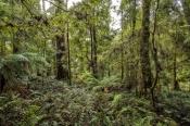 lake-chisholm-nature-walk;lake-chisholm;south-arthur-forest-drive;the-tarkine;tarkine;northwest-tasmania;tasmania-forests;tasmainia;tassie;eucalypt-and-myrtle-rainforest