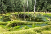 south-arthur-forest-sinkhole;tarkine-sinkhole;south-arthur-forest-drive;the-tarkine;tarkine;northwest-tasmania;tasmania-forests;tasmainia;tassie;eucalypt-and-myrtle-rainforest;sinkhole;sinkhole-tasmania