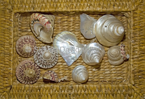 shells;basket of shells;broome shells;turban shells;pearl oyster shells;broome