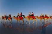 AUSTRALASIA;AUSTRALIA;BEACHES;CAMELS;GROUPS;OUTSTANDING;PEOPLE;REFLECTIONS;TOURISM