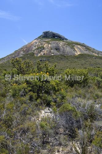 frenchman peak;cape le grand national park;cape le grand;western australian national park;australian national park;bushwalk in cape le grand national park;cape le grand national park bushwalks