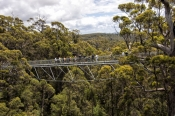 tree-top-walk;treetop-walk;valley-of-the-giants;valley-of-the-giants-tree-top-walk;the-great-southern;southern-western-australia;denmark;walpole