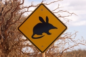bilby;bilby-caution-sign;animal-caution-sign;wildlife-caution-sign;project-eden;shark-bay;francois-peron-national-park;denham;western-australia-national-parks