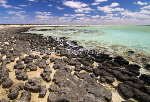 hamelin pool;hamelin pool marine nature reserve;shark bay;stromatolites;early forms of life