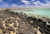 hamelin-pool;hamelin-pool-marine-nature-reserve;shark-bay;stromatolites;early-forms-of-life