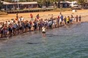 monkey-mia;monkey-mia-beach;monkey-mia-dolphin-resort;monkey-mia-dolphins;shark-bay;peron-peninsula