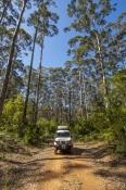 big-brook-arboretum;pemberton-forest-drive;pemberton;western-australia-forest-drive;4wd-pemberton-forest-drive