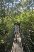beedelup-falls;greater-beedelup-national-park;pemberton;pemberton-forest-drive;western-australia-forest-drive;suspension-bridge;beedelup-falls-circuit-walk