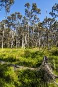 warren-river-cedar;pemberton;pemberton-forest-drive;western-australia-forest-drive;pemberton-forest-drive-scenery