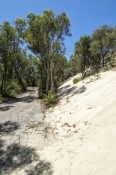 yeagarup-lake;pemberton;dentrecasteaux-national-park;yeagarup-sand-dunes;yeagarup-dune-system;shifting-dunes;yeagarup-4wd-track;yeagarup-dunes-4wd-track