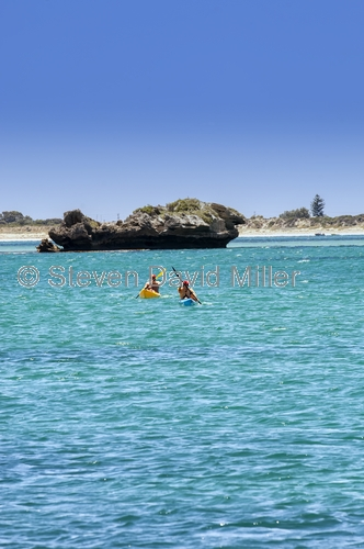 penguin island;rockingham;kayaking
