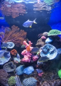 aqwa;aquarium-of-western-australia;aquarium;perth-aquarium