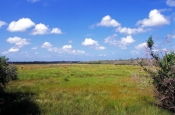 collier-seminole-state-park;florida-state-park;state-park-southwest-florida;salt-marsh;marsh;collier-seminole-state-park-river