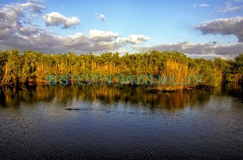 anhinga trail;anhinga boardwalk;royal palm;everglades national park;florida national park;freshwater slough