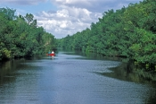 buttonwood-canal;buttonwood-channel;everglades-national-park;wilderness-waterway-canoe-trail;florida-national-park;mangroves;everglades-mangroves;canoeing-in-the-everglades;everglades;everglades-canoe-rental