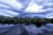 anhinga-trail;anhinga-boardwalk;royal-palm;everglades-national-park;florida-national-park;freshwater-slough;storm-clouds;everglades-storm