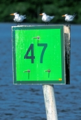 whitewater-bay;everglades-national-park;florida-national-park;ten-thousand-island;everglades-canoe-trail;wilderness-waterway-canoe-trail;channel-marker;whitewater-bay-channel-marker