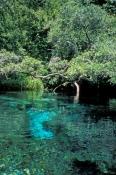 ichetucknee-state-park;itchetucknee-river;itchetucknee-springs;florida-springs;florida-spring-system;central-florida-springs