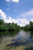 LANDSCAPES;MANGROVE;NORTH-AMERICA;RIVERS;USA;VERTICAL