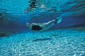 alexander-springs;ocala-national-forest;florida-springs;central-florida-springs;freshwater-spring;florida-freshwater-spring;swimming-in-alexander-springs;snorkelling-in-alexander-springs;snorkeling-in-alexander-springs