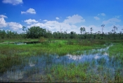 Big Cypress & Tamiami Trail Scenic Drive