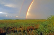 big-cypress-national-preserve-picture;big-cypress-national-preserve;big-cypress-preserve;south-florida;swamp;slough;freshwater-mari-prairie;pineland;tamiami-trail-scenic-drive;tamiami-trail;south-florida-scenery;south-florida;rainbow;double-rainbow;rainbow-over-the-everglades;rainbow-over-big-cypress-preserve;steven-david-miller