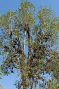 fruit-bats;australian-national-parks