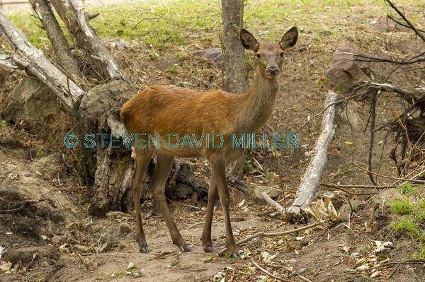 australian national parks;feral animals in australia.