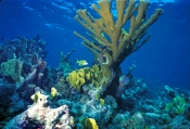Soft Corals, Hard Corals, Coral Reefs
