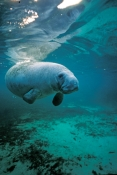 North American Marine Mammals