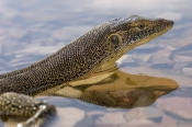 Mertens Water Monitor