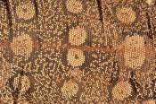 lizard-scutes;reptile-scutes;perentie-skin-pattern