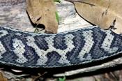 carpet-python;diamond-python;python;snake;python-pattern;python-skin;python-scales;australian-snakes;australian-python;marelia-spilota;kuranda-koala-gardens