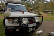 4WD;camping;campsite;birds-sitting-on-car;grampians-national-park;camping-with-wildlife;campground;4
