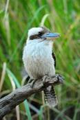 iconic-bird;iconic-australian-bird;australian-national-park