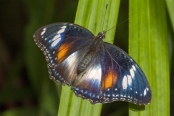 colorful-butterfly;colourful-butterfly