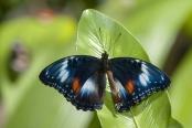 butterfly-wings-unfolding