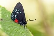 North American Butterflies & Moths
