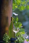 grapes-picture;grapes;grape-vine;vitis-vinifera;wine-grapes;bottle-of-wine;glass-of-wine;wine-and-gr