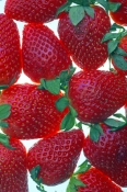 strawberry-picture;strawberry;fragaria;ananassa;red-fruit;strawberries;bright-red