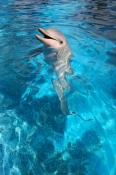 pet-porpoise-pool-picture;pet-porpoise-pool;dolphin-marine-magic;coffs-harbour;new-south-wales;commo