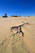 mungo-national-park-picture;mungo-national-park;walls-of-china;sand-dunes;new-south-wales-outback;au