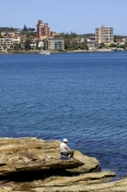 manly;manly-cove;sydney;sydney-harbour;sydney-harbor;sydney-tourist-attractions;man-fishing;fishing;