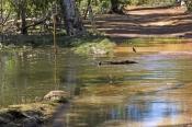 arnhemland;arnhem-land;cobourg-peninsula;garig-gunak-barlu-national-park;murgenella-creek;mugenella-