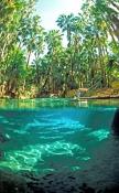 mataranka;mataranka-spring;mataranka-springs;elsey-national-park;freshwater-spring;roper-river;north