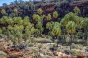 finke-gorge-national-park;palm-valley;northern-territory-national-park;northern-territory;alice-spri